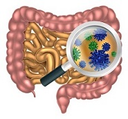 Benefits of healthy gut flora to your health.
