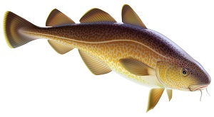Cod liver oil is rich in vitamin A and vitamin D