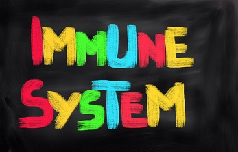 Healthy Gut Flora and the Immune System go hand-in-hand.
