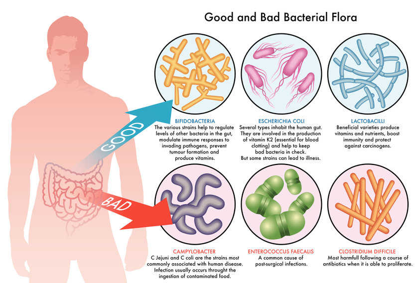 How to Rebuild Gut Flora? Start with Two Strategies